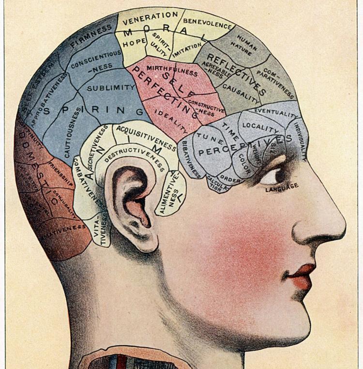 fusiform gyrus – Don\'t Call Me Dumb